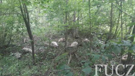 Demineri FUCZ iz minskog polja kod Gračanice, u kome su jučer stradale ovce, izvadili ostatke mine kako bi se provele istražne radnje